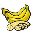 bananas with skin vector image