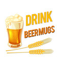 drink beer mugs glass of beer barley background ve vector image vector image