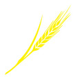 image of a mature spikelet of wheat vector image