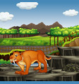 scene with sabertooth in zoo vector image