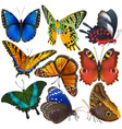 butterfly colorful insect flying for vector image vector image