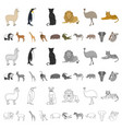 different animals cartoon icons in set collection vector image