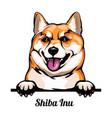 head shiba inu - dog breed color image a dogs vector image vector image