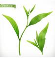 tea plant 3d realistic icon vector image