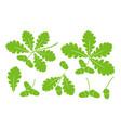 oak leaf vector image vector image