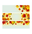 autumn background design of maple leaves vector image