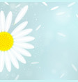 background with white camomile vector image vector image
