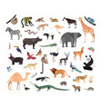 Collection of exotic wild animals isolated on