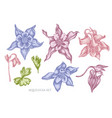 collection of hand drawn pastel aquilegia vector image vector image