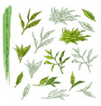 leaves tea branch plant sketch drink vector image vector image