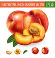 peach on white background vector image vector image