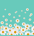 spring background with blooming chamomile vector image vector image