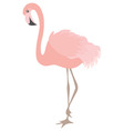 Coral Flamingo vector image