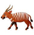 cartoon bongo antelope vector image