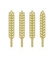set ears wheat barley or rye vector image