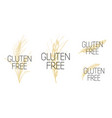 set gluten free symbol with wheat vector image vector image