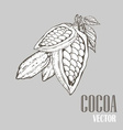 Cocoa vector image vector image