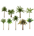 colourful hand drawn palm tree retro tropical vector image vector image