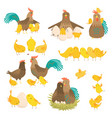 cute cartoon cock family set isolated on white vector image vector image
