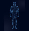 human body low poly on dark vector image vector image