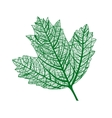 leaf isolated natural macro vector image vector image