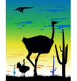 Ostrich in Steppes of Argentina vector image