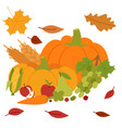 fresh pumpkin thanksgiving decorative seasonal