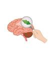 endocannabinoid system inside brain vector image