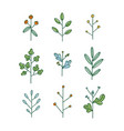 set nine simple hand drawn floral branches vector image