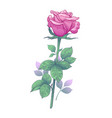 hand drawn pink rose bud with leaves vector image