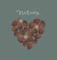 nutmeg spice in a heart shape vector image vector image