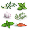 set of fresh herbs seasonings and spices on a vector image vector image