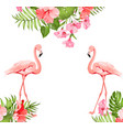 flamingo bird and plumeria flowers isolated over vector image