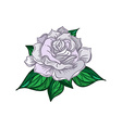Hand Drawn Wedding Rose vector image vector image