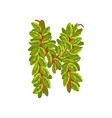 letter m english alphabet made of tree branches vector image