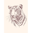Tiger hand drawn vector image vector image