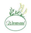 absinthe ingredients fresh grand wormwood vector image