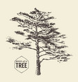 pine tree vintage drawn sketch vector image vector image