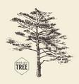 pine tree vintage drawn sketch vector image