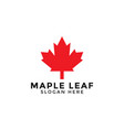 red maple leaf logo icon design template vector image vector image