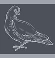 white pigeon and dove bird side view hand drawn vector image