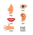 five senses with titles at body parts vector image vector image