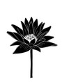 lotus lily water flower sketch for your design vector image