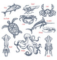 sea animal isolated sketch set of seafood and fish vector image vector image