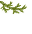 symbol of the new year a green branch of spruce vector image vector image