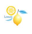 fruit yellow lemon vector image vector image