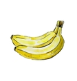 picture of banana vector image