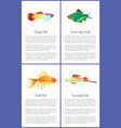 guppy gold and swordtail fishes posters vector image vector image