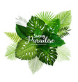 summer tropical poster with green leaf of palm vector image vector image