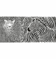 Wild animal background - template with leopard